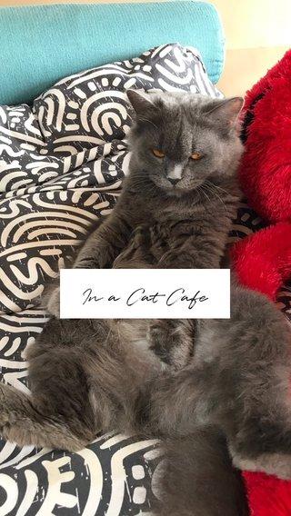 In a Cat Cafe