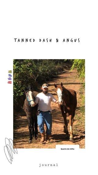 Tanned Dash & Angus journal Quarto de milha