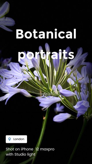 Botanical portraits Shot on iPhone 12 maxpro with Studio light
