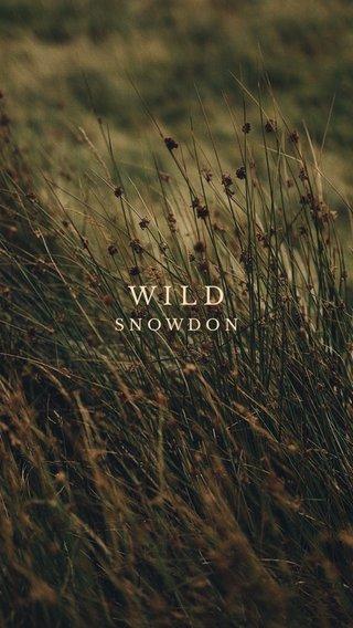 WILD SNOWDON