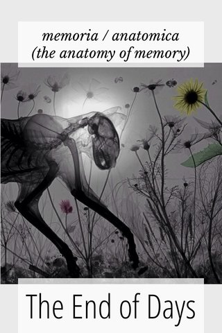 The End of Days memoria / anatomica (the anatomy of memory)