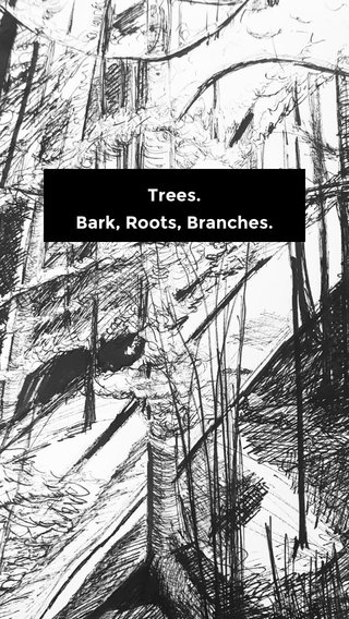 Trees. Bark, Roots, Branches.