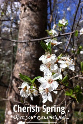 Cherish Spring . Open your eyes,smell,feel...