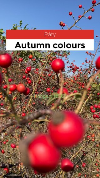 Autumn colours Páty Hungary NEXT