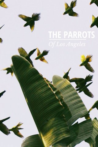 THE PARROTS Of Los Angeles