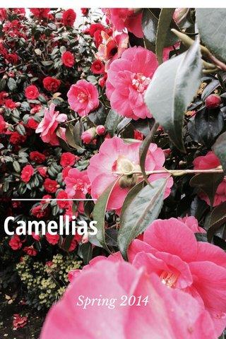 Camellias Spring 2014