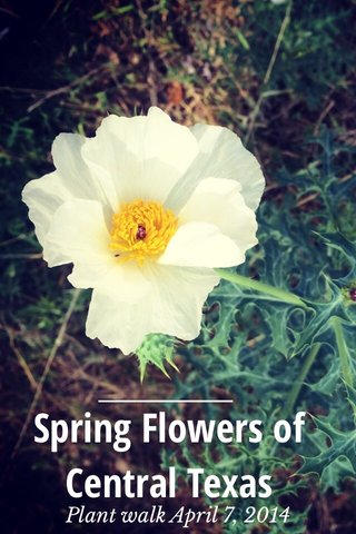 Spring Flowers of Central Texas Plant walk April 7, 2014