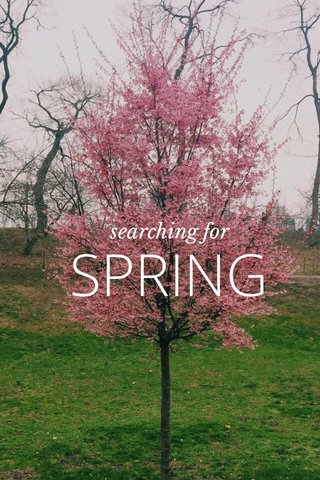 SPRING searching for