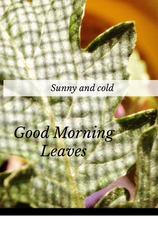 Good Morning Leaves Sunny and cold