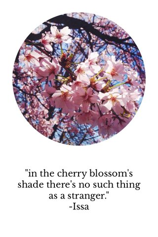 """""""in the cherry blossom's shade there's no such thing as a stranger."""" -Issa"""