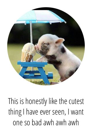 This is honestly like the cutest thing I have ever seen, I want one so bad awh awh awh