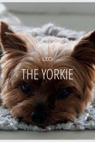 THE YORKIE LEO