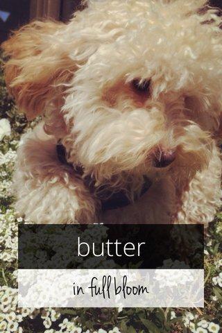 in full bloom butter