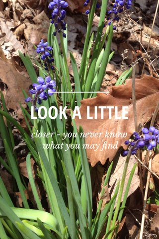 LOOK A LITTLE closer - you never know what you may find