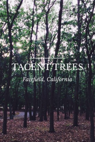 TACENT TREES Fairfield, California
