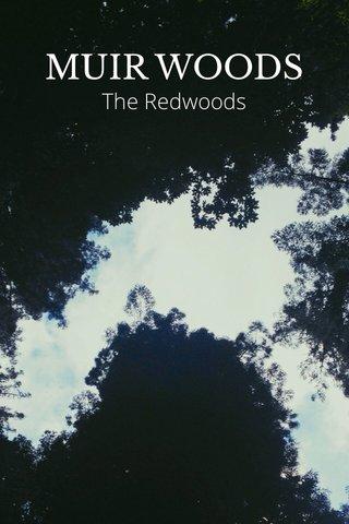 MUIR WOODS The Redwoods