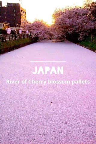 Japan River of Cherry blossom pallets
