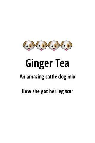 🐶🐶🐶🐶 Ginger Tea An amazing cattle dog mix How she got her leg scar