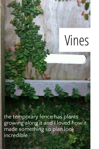 Vines the temporary fence has plants growing along it and I loved how it made something so plan look incredible