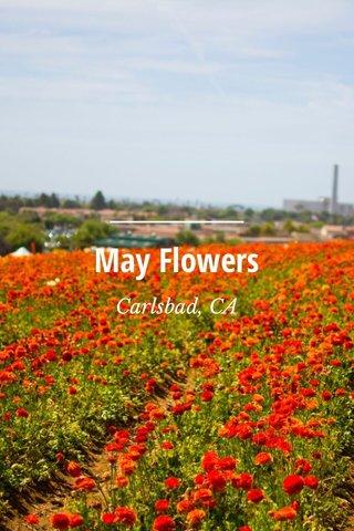 May Flowers Carlsbad, CA