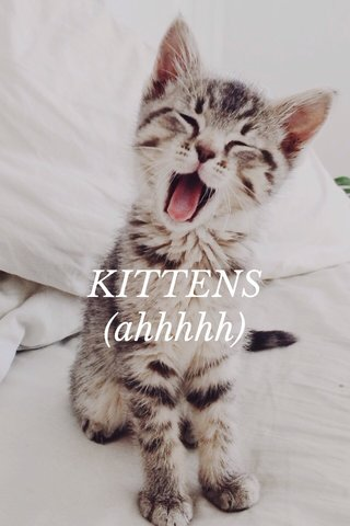 KITTENS (ahhhhh)