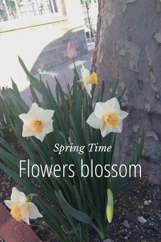 Flowers blossom Spring Time