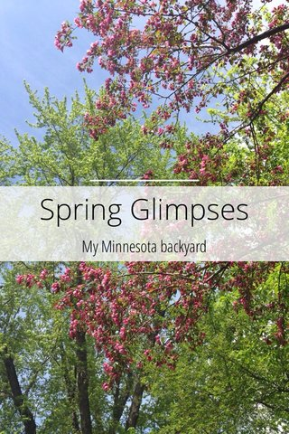Spring Glimpses My Minnesota backyard