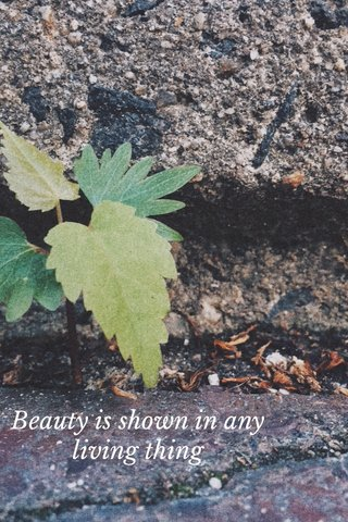 Beauty is shown in any living thing