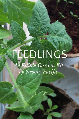 FEEDLINGS An Edible Garden Kit by Savory Pacific