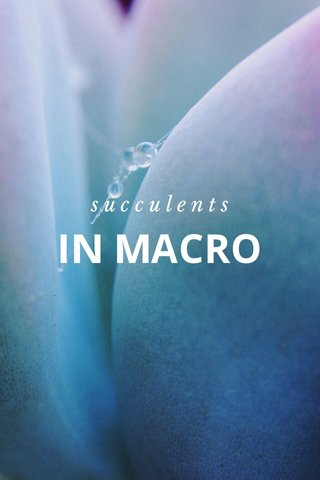 IN MACRO succulents