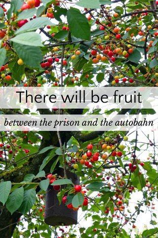There will be fruit between the prison and the autobahn