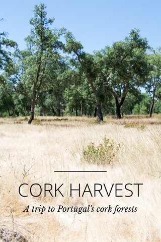 CORK HARVEST A trip to Portugal's cork forests