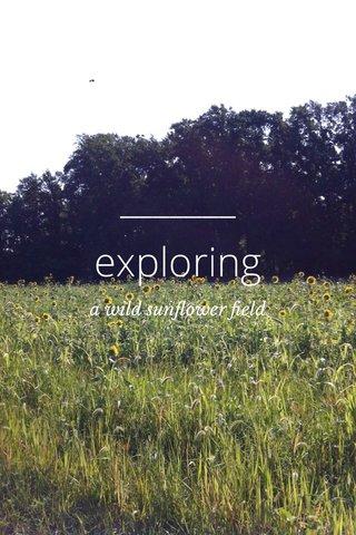 exploring a wild sunflower field