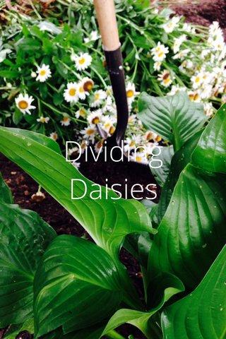 Dividing Daisies