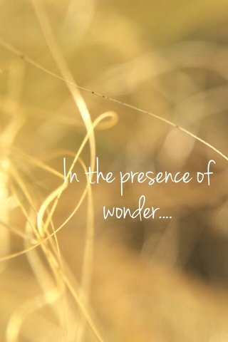 In the presence of wonder....