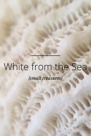 White from the Sea {small treasures}