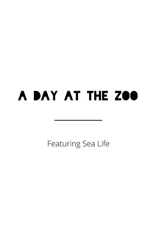 A Day at the Zoo Featuring Sea Life