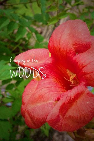 WOODS Camping in the