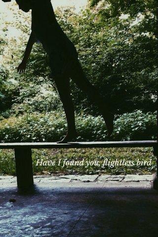 Have I found you, flightless bird