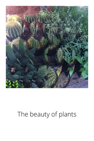 The beauty of plants