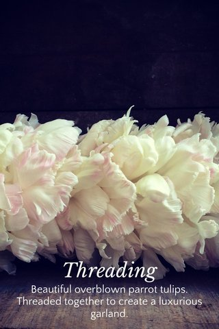 Threading Beautiful overblown parrot tulips. Threaded together to create a luxurious garland.