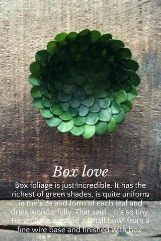 Box love Box foliage is just incredible. It has the richest of green shades, is quite uniform in the size and form of each leaf and dries wonderfully. That said... It's so tiny. Here I have created a small bowl from a fine wire base and finished with box.