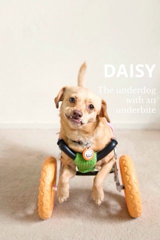 DAISY The underdog with an underbite