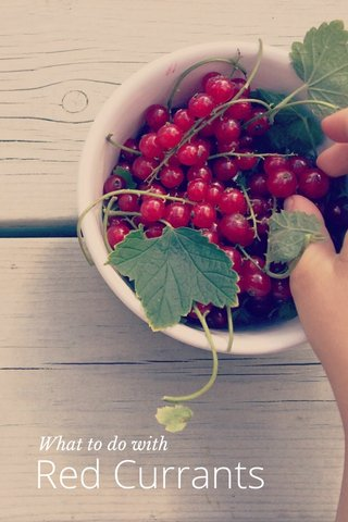 Red Currants What to do with