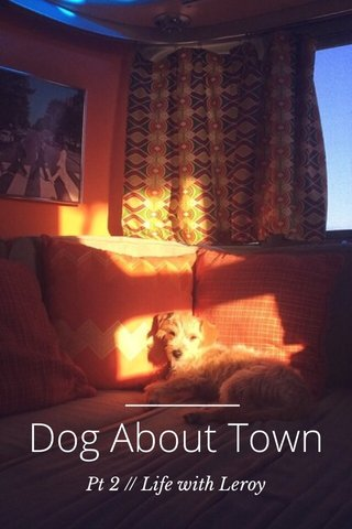 Dog About Town Pt 2 // Life with Leroy