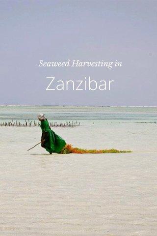 Zanzibar Seaweed Harvesting in