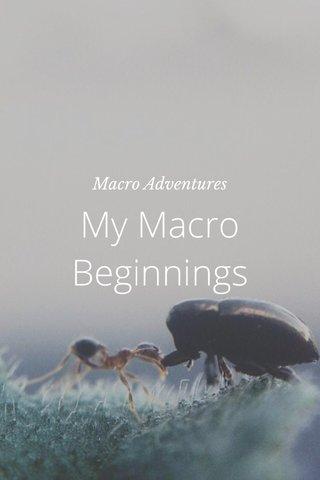 My Macro Beginnings Macro Adventures
