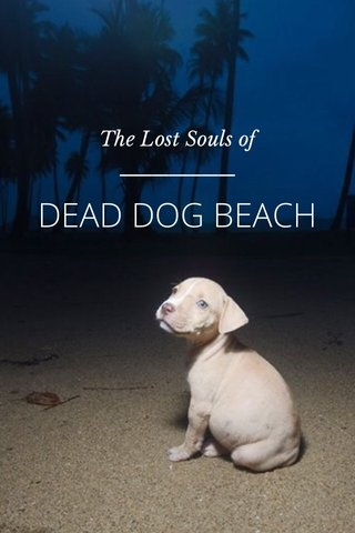 DEAD DOG BEACH The Lost Souls of