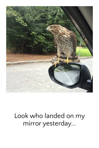 Look who landed on my mirror yesterday...