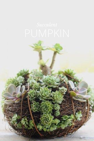 PUMPKIN Succulent